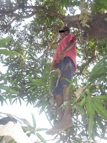 jeune_pendu_mosquee_boussoura_a_conakry